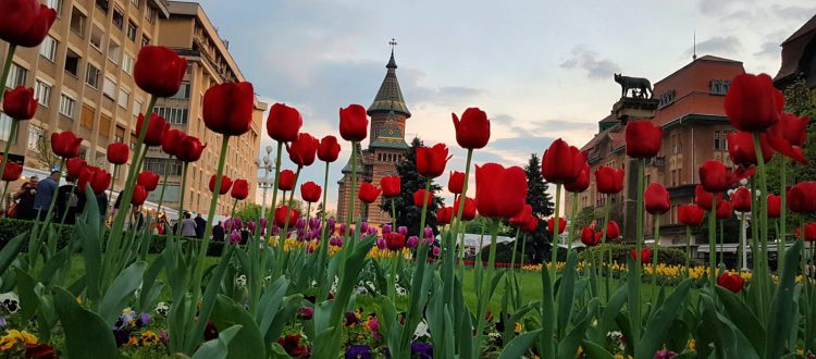 Dimineți printre flori la Timișoara
