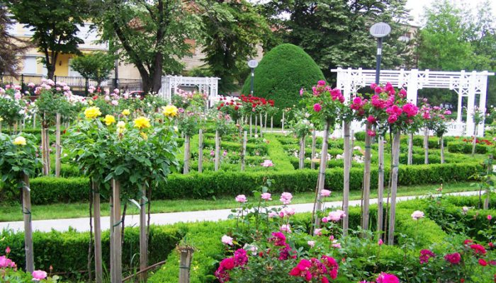 Parcul Rozelor din Timișoara